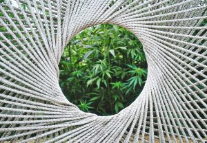 A great use for hemp, industrial rope made from hemp is long-lasting and environmentally friendly.